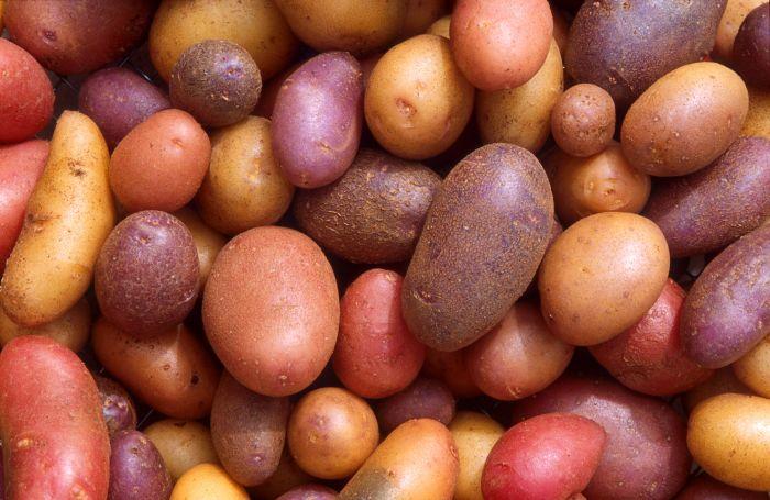 Kartofel - Картофель