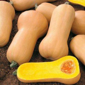 Skvosh ovoshh 300x300 - Сквош овощ